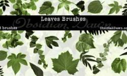 فرش اوراق اشجار للفوتوشوب | Leaves Photoshop Brushes